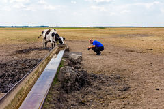 Cow at the water trough. Stock Photo