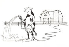 Cow watering Royalty Free Stock Photo