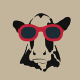 Cow wearing glasses. Royalty Free Stock Image