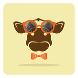 Cow wearing glasses. Stock Photography