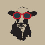 Cow wearing glasses. Stock Photos