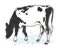 Cow on a white background royalty free stock image