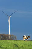 Cow and windmill in landscape. Cow near a windturbine - Belgium Stock Photography