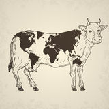 Cow with world map. Stock Images