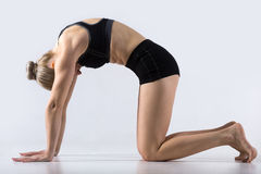 Cow yoga Pose. Sporty beautiful young woman practicing yoga, working out, doing Cat Pose, Marjaryasana, exercise for flexible spine and shoulders, asana paired Royalty Free Stock Images
