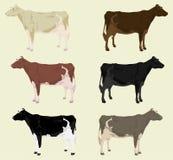 Cow3 stock illustration
