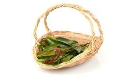 Cowa (cowa Roxb de Garcinia ), Chamuang (nom thaïlandais) des feuilles du nom Chamuangone Images stock