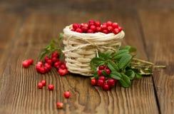 Cowberries в корзине Ягода леса Стоковое фото RF