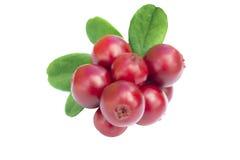 Cowberries - клюквы с листьями на белой изолированной предпосылке Стоковые Фото