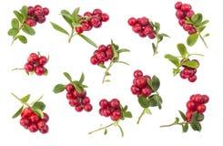 Cowberries - клюквы с листьями на белой изолированной предпосылке Стоковая Фотография RF