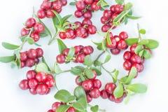 Cowberries - клюквы с листьями на белой предпосылке Стоковое Изображение RF
