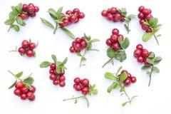 Cowberries - клюквы с листьями на белой предпосылке Стоковые Фото