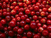 Cowberries. A macro shot of ripe cowberries (lingonberries Stock Photography