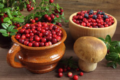 Cowberries Stock Images
