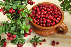 Cowberries. In ceramic pot  on wooden background Stock Photos