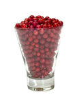 Cowberries. Royalty Free Stock Photos