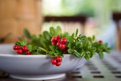 Cowberries Stock Photography