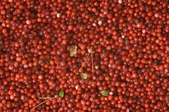 Cowberries Stock Photos