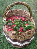 Cowberries in the basket Royalty Free Stock Photos