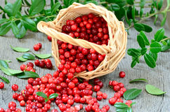 Cowberries in the basket. On wooden table Royalty Free Stock Photography
