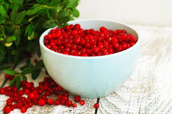 Cowberries Stock Photos