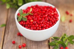 Cowberries Royalty Free Stock Photography