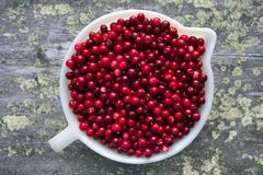 Cowberries in bowl. Royalty Free Stock Photography