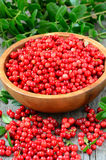 Cowberries in brown bowl Stock Photography