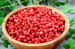 Cowberries in brown bowl. On wooden table Royalty Free Stock Photography