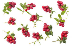 Cowberries - cranberries with leaves on the white background isolated Royalty Free Stock Photography