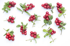 Cowberries - cranberries with leaves on the white background Stock Photos