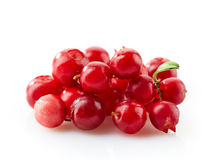 Cowberries macro. On a white background Royalty Free Stock Images