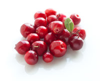 Cowberries macro on a white background. Stock Image