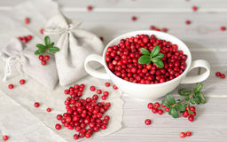 Cowberries Royalty Free Stock Photos