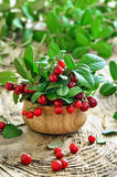 Cowberries on rustic surface Royalty Free Stock Image