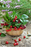 Cowberries in wooden bowl Stock Photo