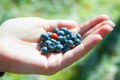 cowberry μυρτίλλων Στοκ εικόνες με δικαίωμα ελεύθερης χρήσης