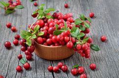 Cowberry в деревянном шаре Стоковые Изображения