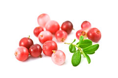 Cowberry Stock Photo