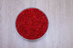 Cowberry стоковое фото