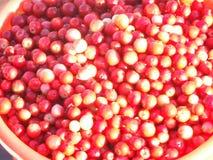 Cowberry Στοκ φωτογραφίες με δικαίωμα ελεύθερης χρήσης