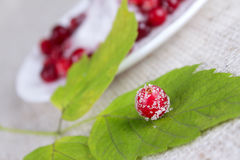 Cowberry berry sprinkled with sugar Royalty Free Stock Photo