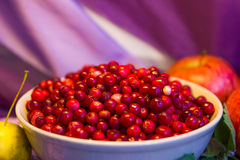 Cowberry close-up Stock Photography