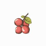 Cowberry currant retro illustration isolated on white background. Royalty Free Stock Photo