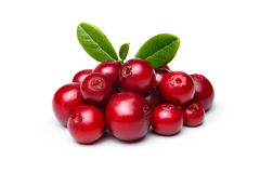 Cowberry (foxberry,lingonberry) Stock Photography