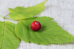 Cowberry on green sheet Royalty Free Stock Photos