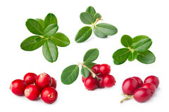 Cowberry isolated Royalty Free Stock Photo