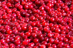 Cowberry jam Stock Image