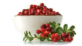 Cowberry Stock Images