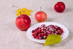Cowberry and red apples Stock Photography